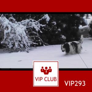 VIP293: Spadło dużo śniegu