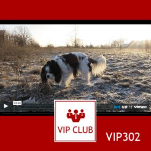 VIP302: Zimny poranek z Jobie [3:40]