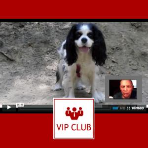 learn polish vip club icon