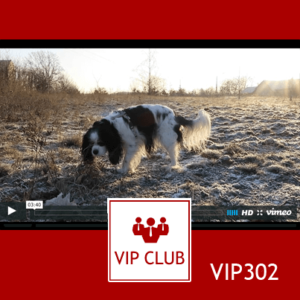 learn polish video