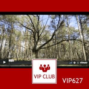 learn polish VIP627